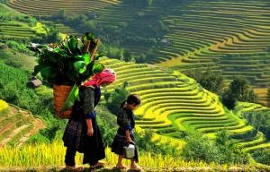 SAPA 3N2D BY TRAIN (EASY TREKKING)